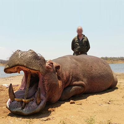 Dalton and York Safaris