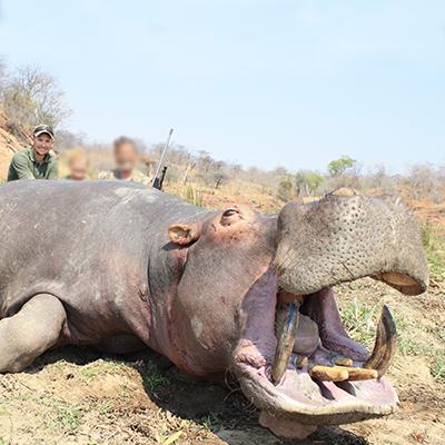 dalton and york safaris-hippo5